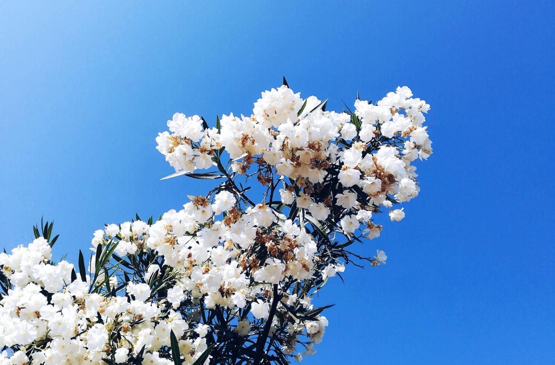 Fotografia a uma ramo de uma árvore em flor.