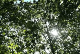 Fotografia do sol a espreitar e a adivinhar um dia incrível.
